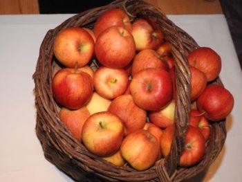 Obst und Früchte